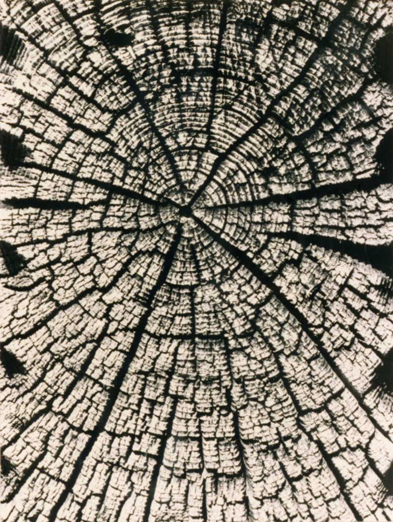 Holz aus einem Heustadl